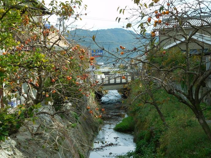 151027亀岡の秋 (3)
