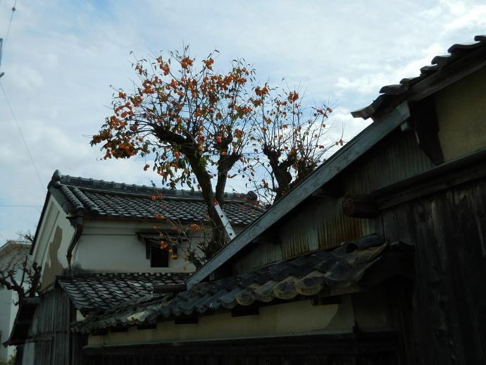 151027亀岡の秋 (5)