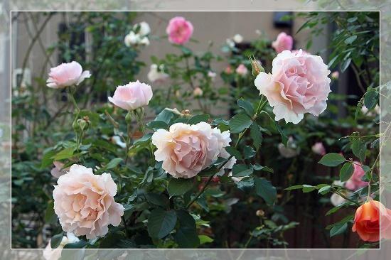 s-151104ラ・マリエIMG_9264