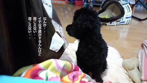 IMG_20151207_071847えああtiroyoko_convert_20151208101404
