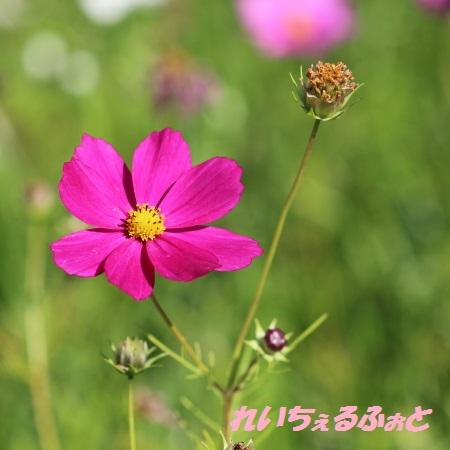 DPP_9595.jpg