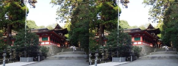 石上神宮 廻廊と神杉(平行法)