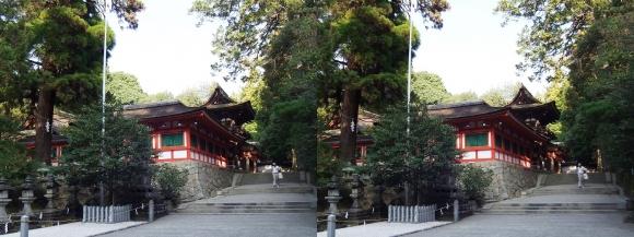 石上神宮 廻廊と神杉(交差法)
