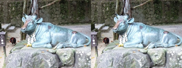 石上神宮 牛像(平行法)
