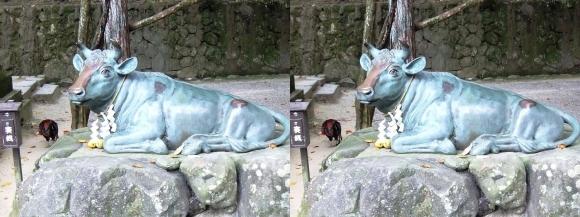 石上神宮 牛像(交差法)