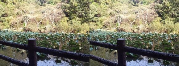石上神宮 蓮池(平行法)