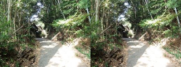 山の辺の道F-①(交差法)