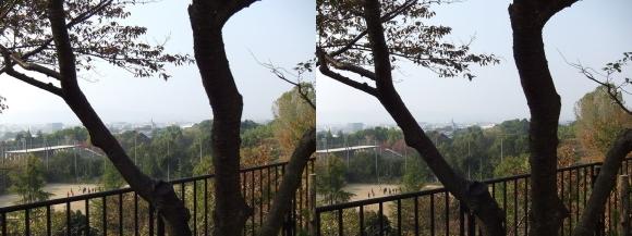 天理観光農園「峠の茶屋」②(交差法)