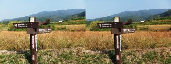 山の辺の道C-③(交差法)