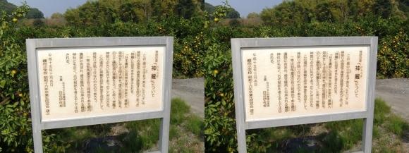 山の辺の道B 神籬①(交差法)