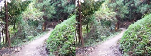 山の辺の道A-③(交差法)