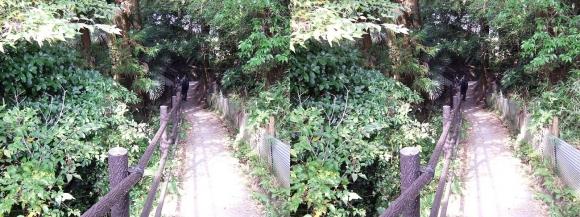 山の辺の道A-①(交差法)