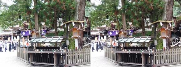 大神神社 巳の神杉(交差法)