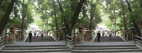 大神神社 参道②(交差法)