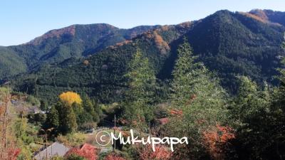 IMG_2536_20151205_400_里山風景