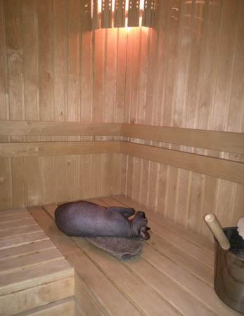 sauna2015