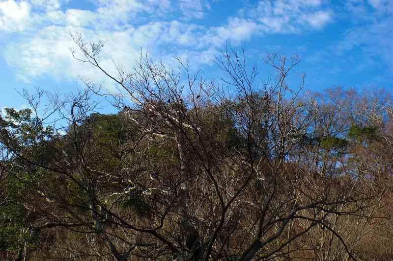 英彦山 峰入り古道 (18)