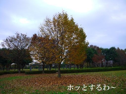 P1430514(1).jpg