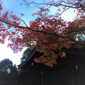 20151128kashiharajingu2.jpg