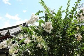 寂光寺の花.