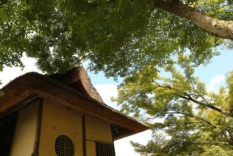 2016 9 4 高台寺の茶室と緑.jpg