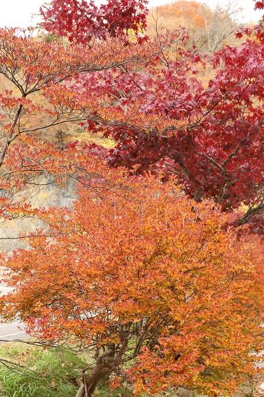 2016 10 31 紅葉真っ盛り 白糸の滝付近 ブログ用.jpg