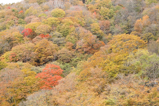 2016 10 31 紅葉ラインの紅葉 ブログ用3.jpg