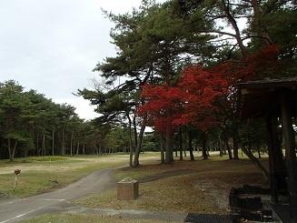 2016 11 2 ゴルフ.jpg