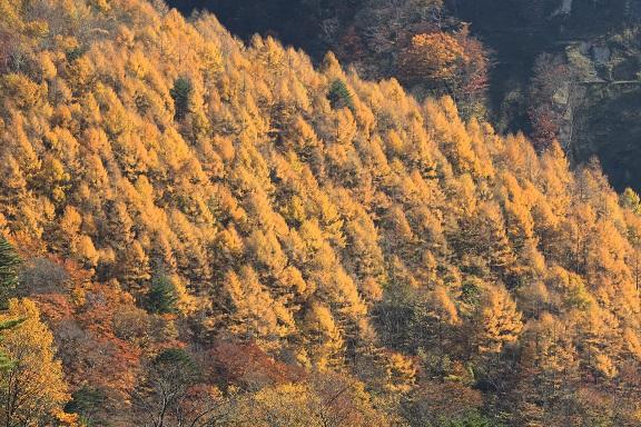 2016 11 9  カラマツの山並み ブログ用.jpg
