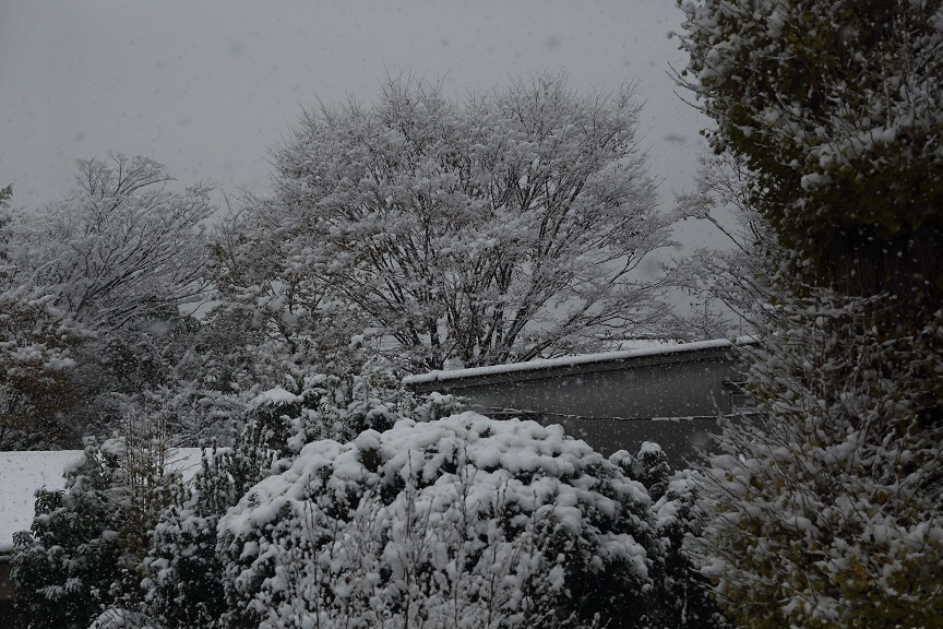 2016 11 24 朝の寝室からの雪景色 ブログ用.jpg