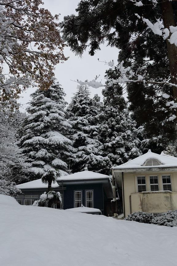 2016 11 24 雪に包まれた別荘 ブログ用 .jpg