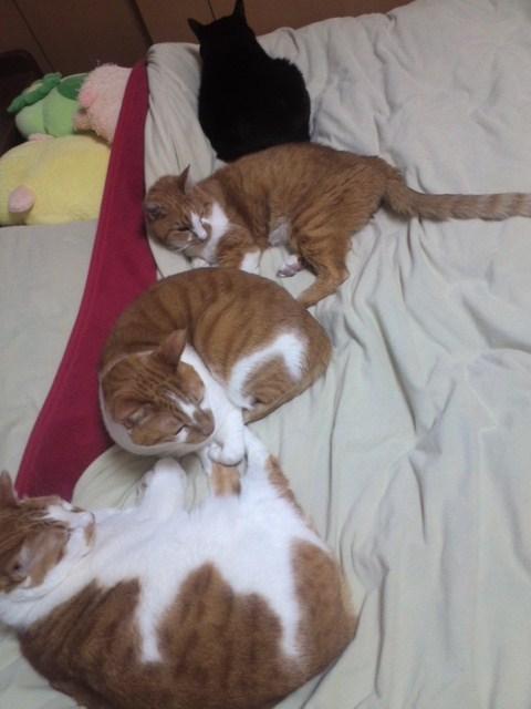 ベッドを占拠するねこ