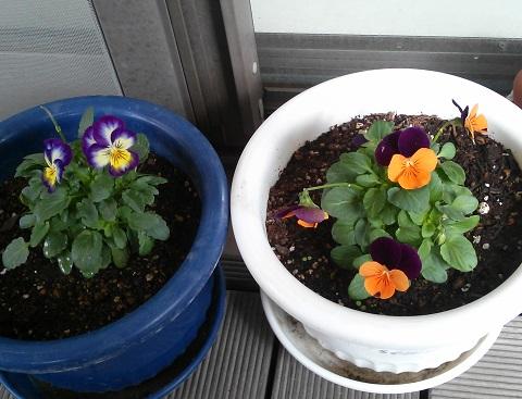 gardening575.jpg