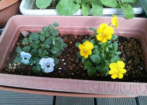 gardening576.jpg