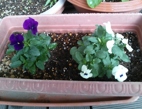 gardening577.jpg