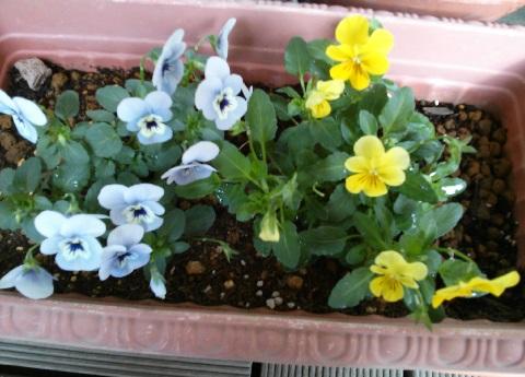 gardening584.jpg