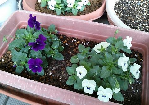 gardening586.jpg