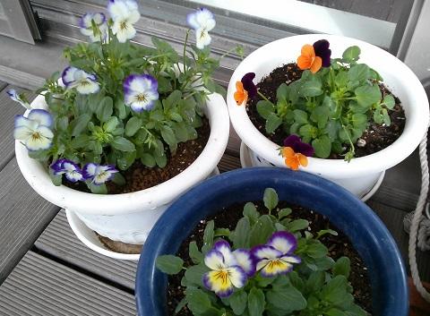 gardening587.jpg