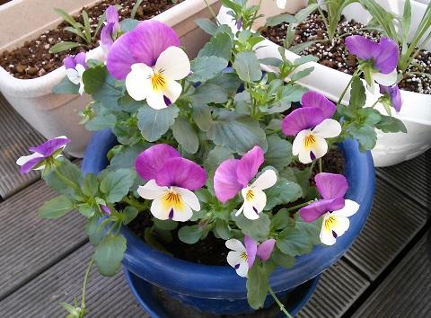 gardening595.jpg