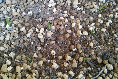 gardening600.jpg
