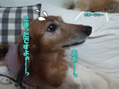 DSC_03860.jpg