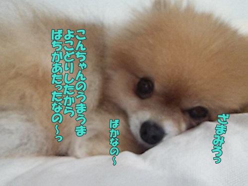 DSC_038900.jpg