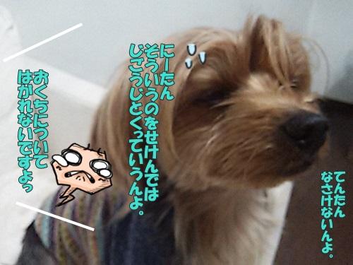 DSC_039100.jpg