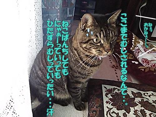 DSC_04260.jpg