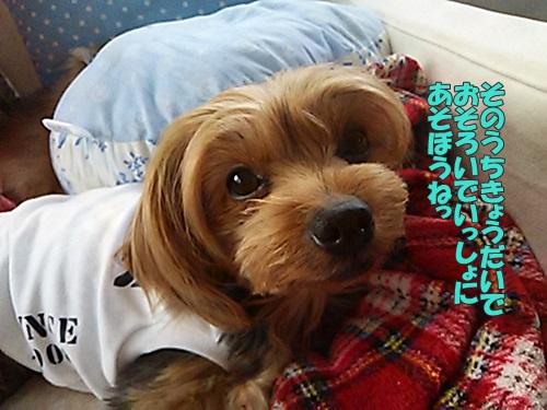DSC_04320.jpg