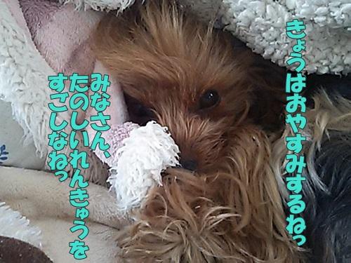 DSC_043800.jpg