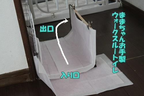 IMG_69270.jpg