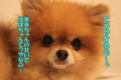 IMG_70140.jpg