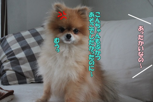 IMG_70770.jpg