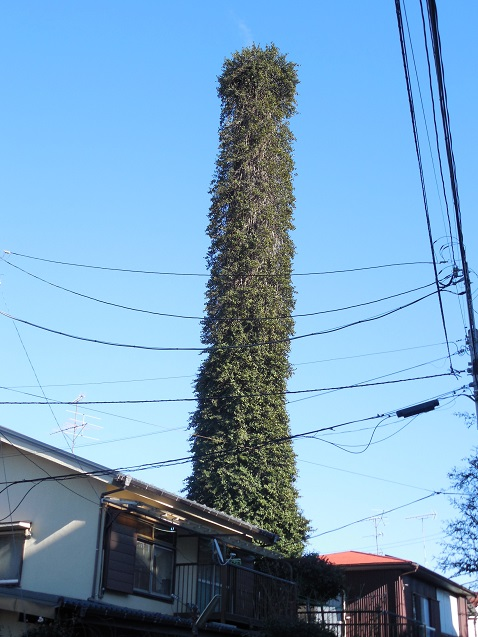 緑の塔b 610